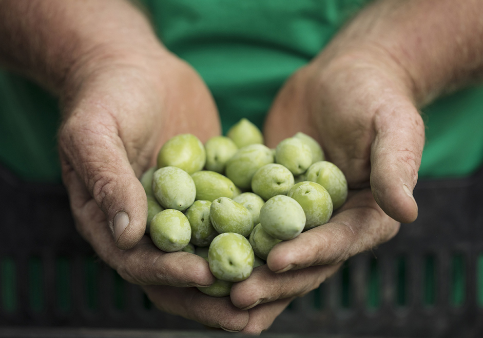 close-up photo of hands holding a mound of olives