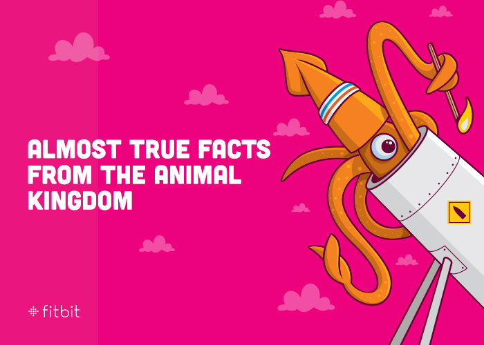 Fitbit 2013 : Almost True Facts from the Animal Kingdom