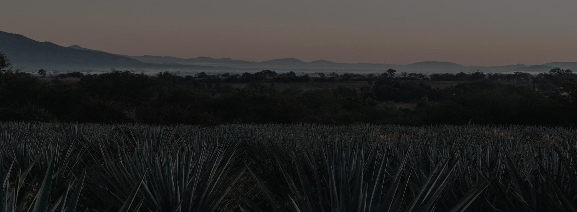 Volcán De Mi Tierra Tequila