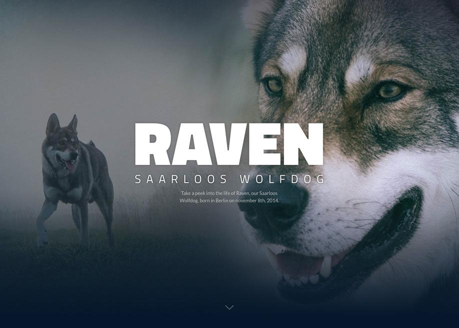 Wolfdog Raven