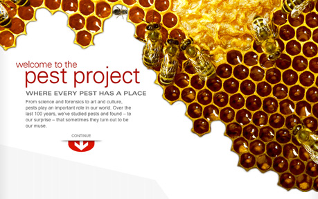 Orkin: The Pest Project